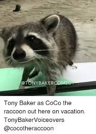 Raccoon Excellent Meme - 25 best memes about the raccoons the raccoons memes