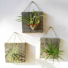 i heart air plants especially because i u0027ve had success keeping