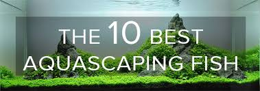 Aquascape Aquarium Designs The Top 5 Best Aquascaping Plants Aquarium Info