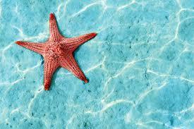 underwater wallpaper murals wallpaper orange starfish underwater square wall murals