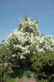 Daniel Stowe Botanical Garden by 23 Best Plants At Daniel Stowe Botanical Garden Images On