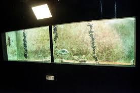 vasche acquario acquario di trieste vasche dei pesci foto di acquario marino