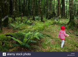 little lost in the forest stock photo royalty free image