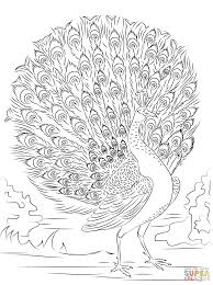 peacock coloring pages advanced peacock coloring page free