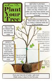 For A Tree Planting Maintenance Tucson Clean And Beautiful Inc