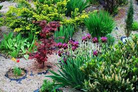 beautiful rock garden in the yard with different plants stock