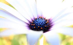 white flower wallpaper white flower macro up purple hd flowers 8544