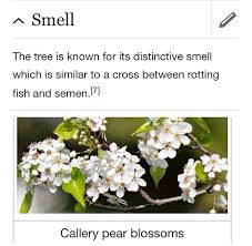 this plant has a distinct smell