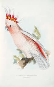 Parrot Decorations Home Edward Lear Ornithological Illustration Old Sheets