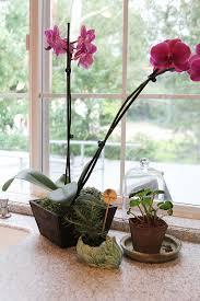 beautiful indoor plants indoor plants withheart