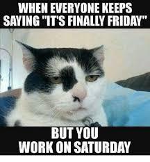Working Cat Meme - working saturday meme pictures 1