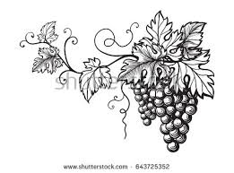 free drawn bunch of grapes vector design download free vector