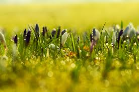 spring flower spring flowers background free stock photo public domain pictures