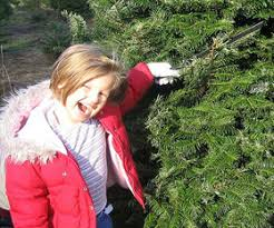 7 fun places to buy christmas trees around the lehigh valley