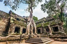 ta prohm to lose iconic trees journeys within tour company