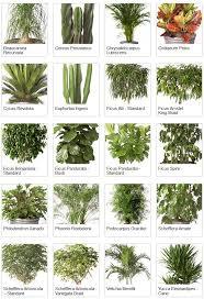 451 best gardening houseplants images on pinterest houseplants