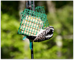 bird feeders u2013 amy u0027s birds