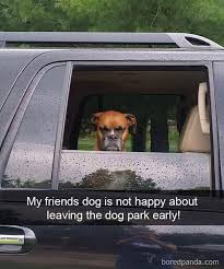 Dog In Car Meme - 20 dog pictures meme dump of the day dog pictures meme and dog