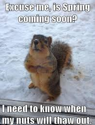 Squirrel Nuts Meme - is spring coming soon my nuts need to thaw out squirrel spring