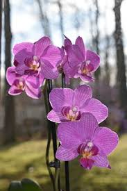 pictures of orchids orchid flower images pixabay free pictures