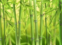 shoots glue more bamboo floors 101