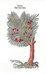 tree symbolism in mythology