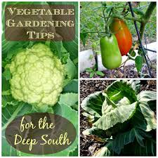 greneaux gardens vegetable gardening tips for the deep south