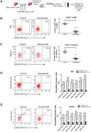 The Interplay Of Physical And Anthelmintic Niclosamide Disrupts The Interplay Of P65 And Foxm1 β