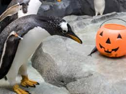 lots of halloween costume parties and fall activities throughout fall festivals and events chattanooga