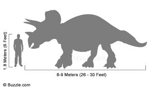 30 feet in meter facts about triceratops that will make your blood run cold