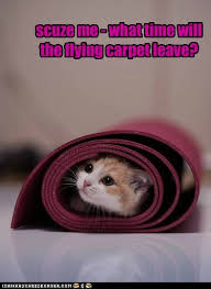 Flying Cat Meme - lolcats flying carpet lol at funny cat memes funny cat