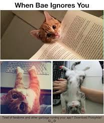 Kat Meme - kitty kat meme by howe memedroid