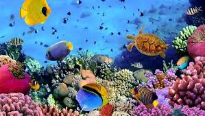 wallpaper ikan bergerak untuk pc aplikasi live wallpaper gratis keren dan terbaik