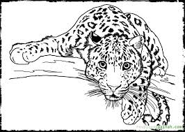 detailed animal coloring pages adults art kids