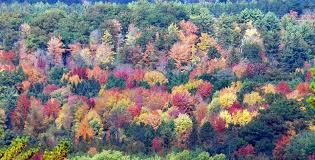 michigan fall colors peak 2016 mlive
