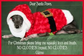 christmas card ideas for your dog romp italian greyhound