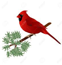 cardinal bird on branch clip art u2013 clipart free download