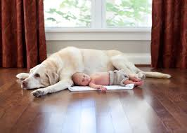 Laminate Floors And Pets Building A Custom Home Advice If You Have Small Kids Or Pets Ndi