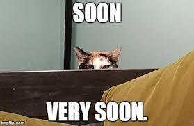 Soon Meme - image tagged in cat meme imgflip