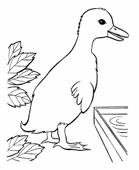 bluebonkers free printable easter ducks coloring sheets 17