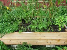 why build a raised bed vegetable garden
