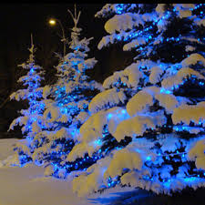 blue christmas lights blue lights on snow covered trees gives the illusion of blue