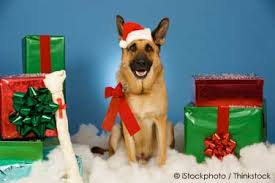 gifts for pets an idea from santa