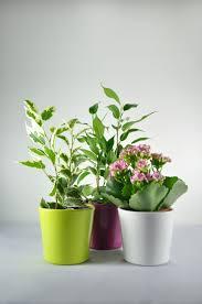 plante d駱olluante bureau plante publicitaire et bien être au travail objet publicitaire