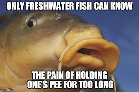 Fish In The Sea Meme - why can t freshwater fish survive in saltwater and vice versa