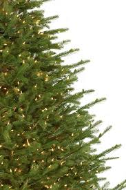 fraser fir christmas tree nature s own fraser fir 7 5ft artificial christmas tree staylit