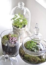 terrarium models and ideas to create a mini garden home decoo