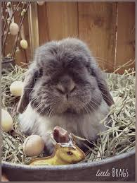 little brags serious cuteness alert the real easter bunny