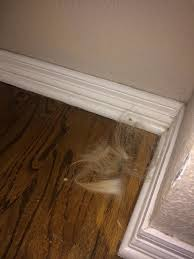 Best Laminate Flooring With Dogs Are You Treating Your Dog Allergies The Best Way