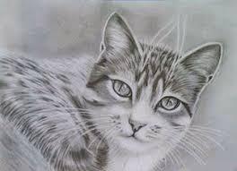 imagenes a lapiz de gatos resultado de imagen para gatos negros dibujos a lapiz gatito